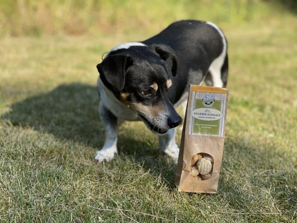 Hypoallergenes Hundefutter - Insektenprotein